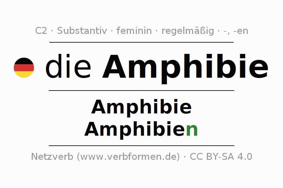 Deklination Amphibie | Alle Formen, Plural, Regeln, Sprachausgabe