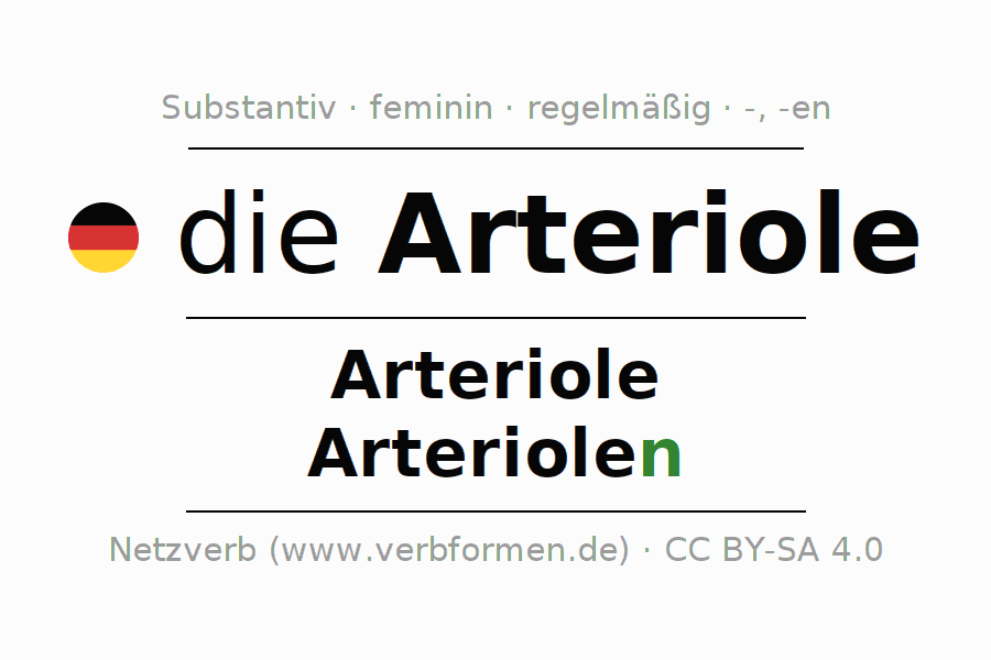 Groß Arteriolen Zeitgenössisch - Menschliche Anatomie Bilder ...
