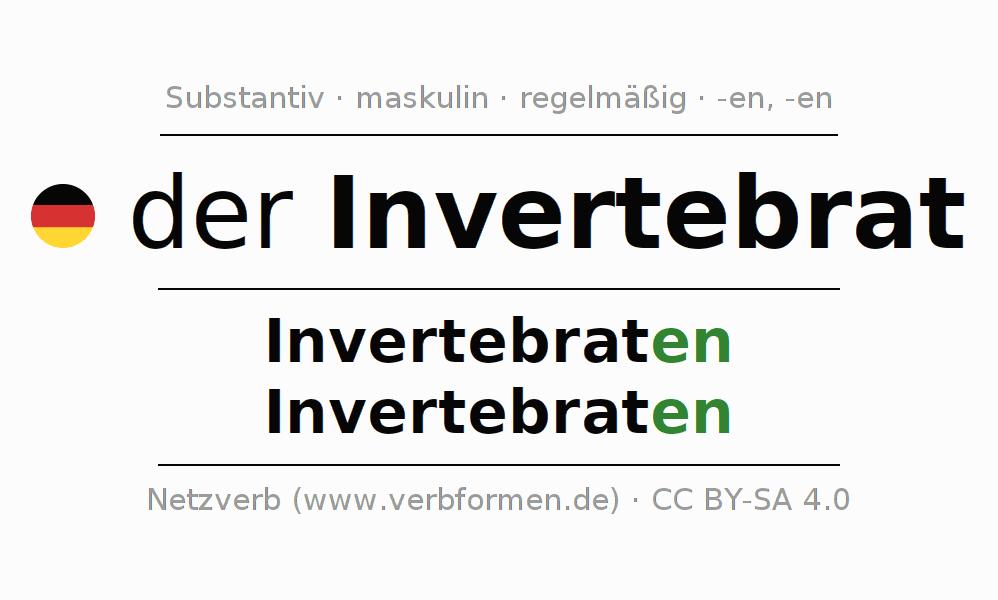 Deklination Invertebrat | Alle Formen, Plural, Regeln, Sprachausgabe