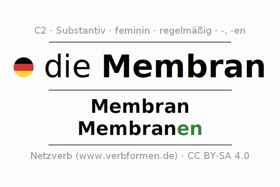 Deklination | Membran | Alle Formen, Plural, Regeln und Downloads