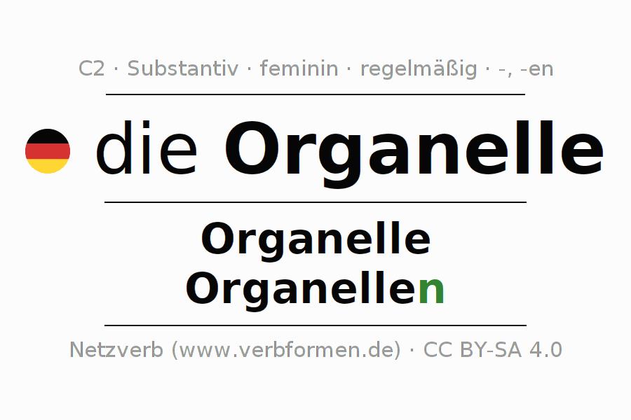 Deklination   Organelle   Alle Formen, Plural, Regeln und Downloads