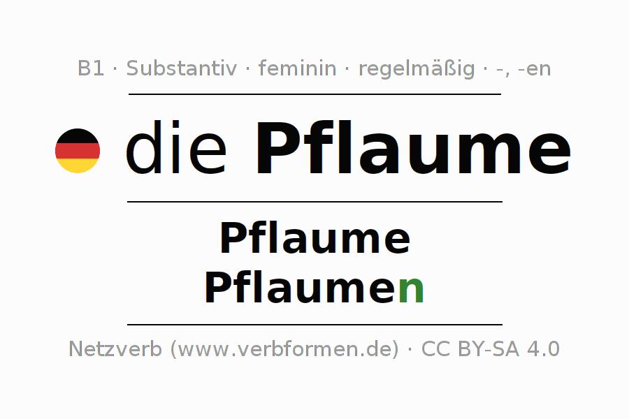 Deklination | Pflaume | Alle Formen, Plural, Regeln und Downloads