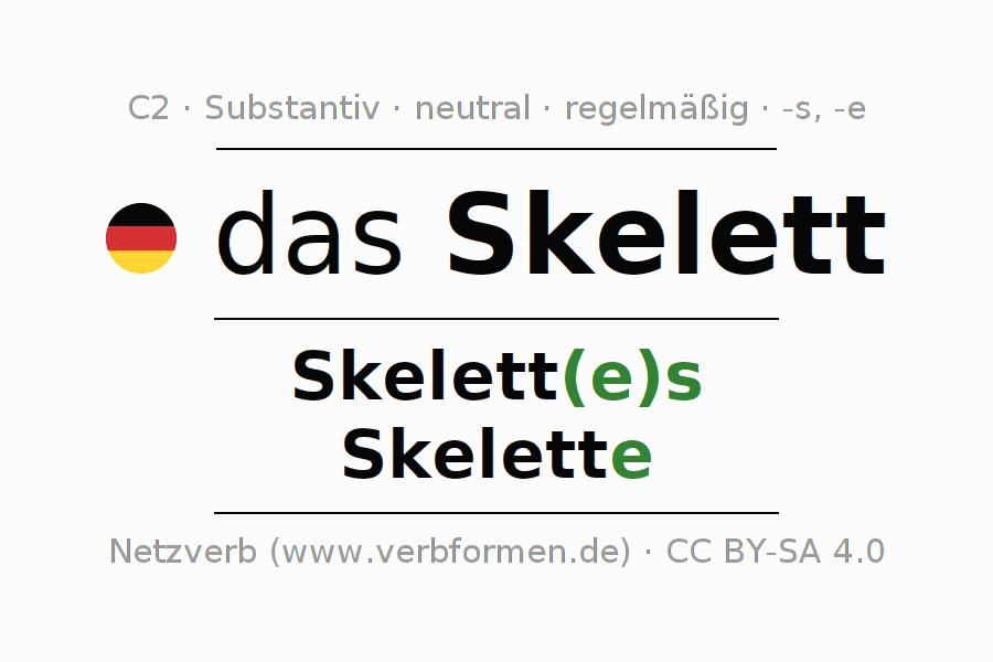 Deklination Skelett | Alle Formen, Plural, Regeln, Sprachausgabe