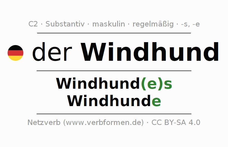 Windhund Englisch